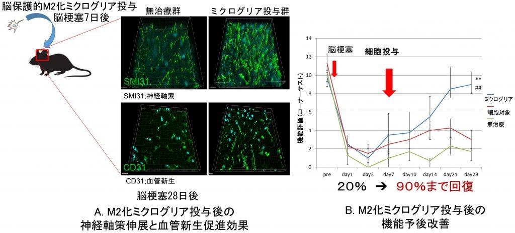 図2.ミクログリアを用いた機能回復を促進する細胞療法