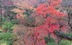弥彦村の紅葉谷