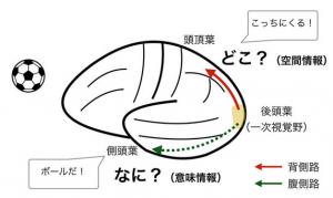 脳研コラム